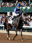 LEXINGTON, KY - OCTOBER 08: #2 Tepin and jockey Julien Leparoux finish 2nd in the 19th running of The First Lady (Grade 1) $400,000 at Keeneland Race Course in Lexington, KY.  October 8, 2016, Lexington, Kentucky. (Photo by Candice Chavez/Eclipse Sportswire/Getty Images)