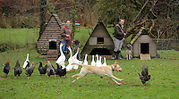 FAO JANET TOMLINSON, DAILY MAIL PICTURE DESK<br />Pictured: Employees with dogs hens and geese at the farm Wednesday 23 November 2016<br />Re: The Dog House in the village of Talog, Carmarthenshire, Wales, UK