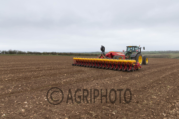 1-4-2021 A contractor drilling sugar beet in Lincolnshire <br /> ©Tim Scrivener Photographer 07850 303986<br />      ....Covering Agriculture In The UK....