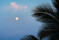 Full moon and palm tree at sunrise. Hawaii, The Big Island