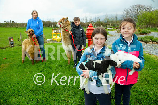 Elenor, Shea (9) Lilly (11) and Kitty (7) Wall getting ready to reopen Sandy Feet Farm on the 1st of May.