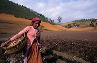 INDIA Tamil Nadu Nilgiri, land labourer plant potatos in the Nilgiri Mountains / INDIEN Tamil Nadu Nilgiris, Landarbeiter saehen Kartoffeln im Feld in den Nilgiri Bergen