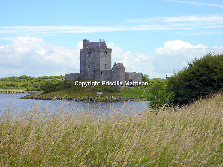 County Galway, Republic of Ireland - July 17, 2010:  Wild grass blows in front of the shadowy Dunguaire Castle.