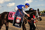 Toronto, ON - September  17:   Tepin, #8, riden by Julien R. Leparoux makes it's way to the winner's circle  at the Ricoh Woodbine Mile Stakes  at Woodbine Race Course on September 17, 2016 in Toronto, Ontario. (Photo by Sophia Shore/Eclipse Sportswire/Getty Images)