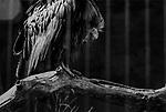 """Fallen""<br /> Vulture Enclosure<br /> Los Angeles Zoo<br /> Los Angeles, CA<br /> From the ""Captivity"" series<br /> © Thierry Gourjon-Bieltvedt"