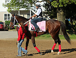LOUISVILLE, KY - APRIL 24: Paola Queen (Flatter x Kadira, by Kafwain) returns from the the track at Churchill Downs after preparing for the Kentucky Oaks. Owner Grupo 7C Racing Stable, trainer Gustavo Delgado. (Photo by Mary M. Meek/Eclipse Sportswire/Getty Images)