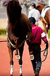 TOYOAKE,JAPAN-MAR 20: Kicking horse at the padock at Chukyo Racecourse on March 20,2021 in Toyoake,Aichi,Japan. Kaz Ishida/Eclipse Sportswire/CSM