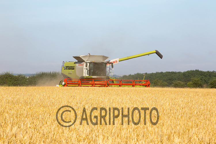 Claas Lexion 780 harvesting Winter Barley in The Lincolnshire Wolds<br /> Picture Tim Scrivener 07850 303986