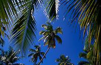 Palm trees and beaches