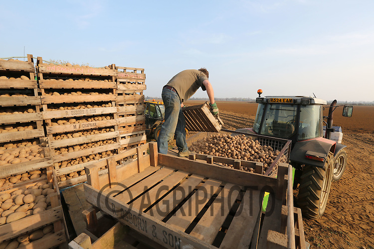 Loading a Potato Planter  In Lincolnshire.Picture Tim Scrivener date taken 20th March 2012 Mobile 07850 303986 e-mail tim@agriphoto.com. ....covering agriculture in the Uk....