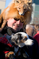 A man in a fox fur cap keeps his dog warm inside of his coat at the Fur Rondy Festival, downtown Anchorage.