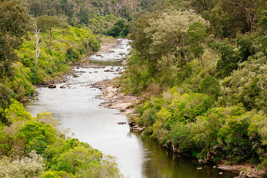 Image Ref: CA1208<br /> Location: Mitchell River National Park, Victoria<br /> Date of Shot: 04.12.20