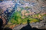 Image Ref: CA983<br /> Location: Bushrangers Bay Track<br /> Date of Shot: 28.09.19