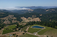 Aerial photograph Sonoma Coast Pinot Noir vineyards