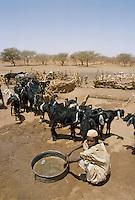 - Northern Sudan, nomads at a well in the Libyan Desert....- Sudan settentrionale, nomadi ad un pozzo nel Deserto Libico..