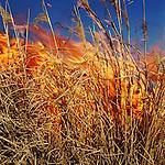 Burning grass, Lyon County, Kansas, 1994