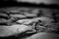 most gruesome cobbles of the whole race can be found on the Carrefour de l'Arbre<br /> <br /> 2014 Paris-Roubaix reconnaissance