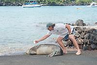 Hawaii HWNM Sanctuary coordinator Justin Viezbicke uses hair coloring solution to bleach an identification number into the fur of a Hawaiian monk seal, Neomonachus schauinslandi ( Critically Endangered, endemic species ), 3 year old male, Keauhou Bay, Kona, Hawaii ( Big Island )