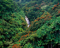 Nanue Falls Surrounded by Palm Trees & Red Tulip Trees, Tropical Rain Forest, Big Island, Hawaii, USA.