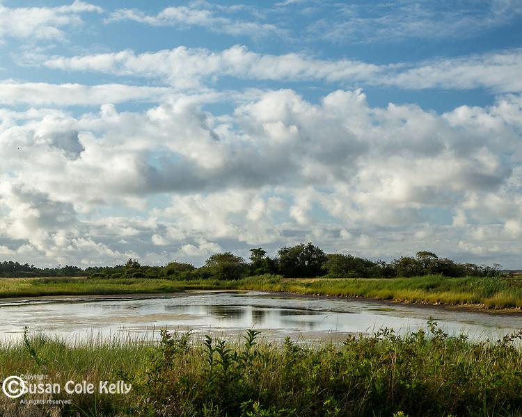 *** at the Parker River National Wildlife Refuge in Newburyport, Massachusetts, USA