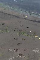 Fischotter, Spuren, Spur im Sand, Schlamm am Gewässerufer, Trittsiegel, Fährte, Europäischer Fischotter, Fisch-Otter, Otter, Lutra lutra, river otter, European otter, track, footprint, scent, La Loutre d'Europe, Loutre européenne, loutre commune