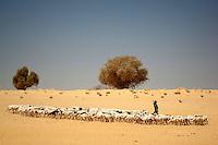 An Arab Moor shepherd herds his goats near the Sahara Desert town of Boujbeja. /Felix Features