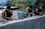 Three boys patiently crack walnuts with rocks in the Rushan Valley of the Pamir Mountains of Tajikistan.