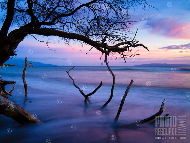 Waves decorated with the colors of an ebbing sunset wash over a fallen tree's branches at a sandy beach in Lahaina, Maui.