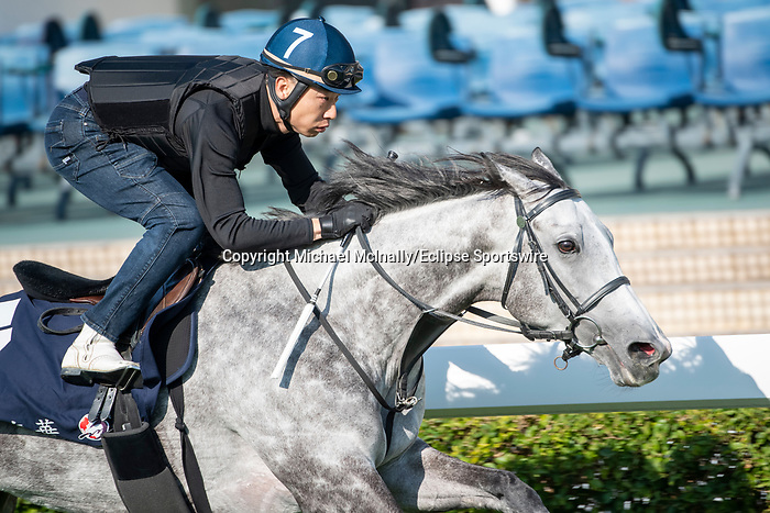 SHA TIN, HONG KONG – December 4: Citron Spirit at trackwork on December 4 at Sha Tin Race Course in Hong Kong before starting in the Longines Hong Kong Mile. Michael McInally/Eclipse Sportswire/CSM
