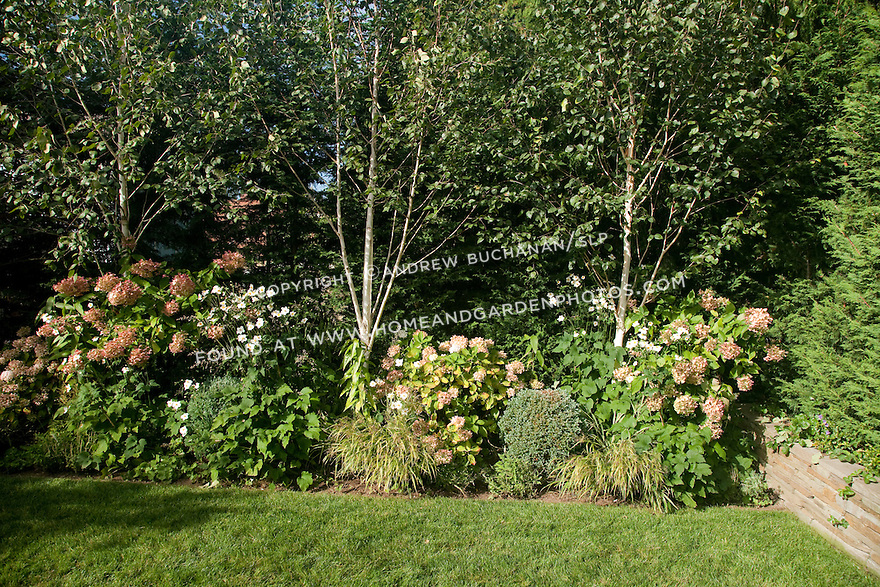 This mixed border of perennials, shrubs and trees provides privacy for this small, in-city backyard.