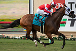 "DEL MAR, CA  AUGUST 17:  #9 Acclimate, ridden by Florent Geroux, wins the Del Mar Handicap (Grade ll) Breeders' Cup ""Win and You're In"" Turf Division, on August 17, 2019 at Del Mar Thoroughbred Club in Del Mar, CA. (Photo by Casey Phillips/Eclipse Sportswire/CSM)"