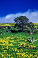 Scenic meadow land in Waimea, North Kohala