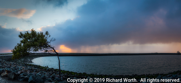 "The ""Wind Blown Tree"" in a multiple image panoramic at the San Leandro Marina with a background of breaking storm clouds at sunset, some clouds still raining on parts of the San Francisco Bay area."