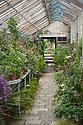 Greenhouse, Parham, mid May.