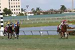 HALLANDALE BEACH, FL - FEBRUARY 06:     Lady Shipman #2 with jockey Irad Ortiz Jr on board, wins the 11th running of the Ladies' Turf Sprint on Donn Handicap Day  at Gulfstream Park on February 06, 2016 in Hallandale Beach, Florida. (Photo by Liz Lamont)