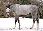 17 January 2010.   Kentucky Stallion Farms.  Dunkirk at Ashford Stud.  New for 2010.