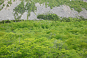 Franconia Notch State Park - The base of Cannon Mountain cliff during the spring months in Franconia, New Hampshire USA.