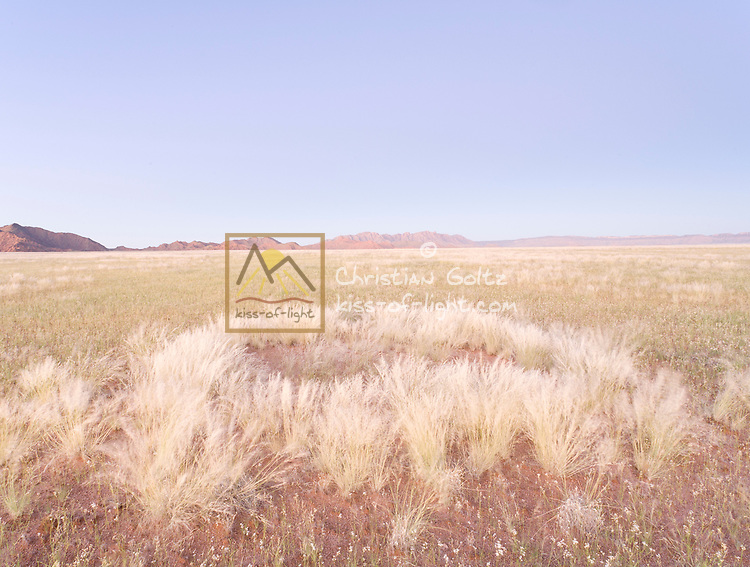 Fairy Circles, rings of grass around an otherwise unvegetated spots, are one of the many mysteries of the Namib.