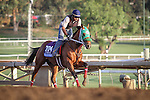 October 27, 2014: Private Prospect exercises in preparation for the Breeders' Cup Juvenile at Santa Anita Park in Arcadia, California on October 27, 2014. Zoe Metz/ESW/CSM