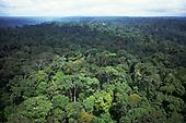 Amazonia, Brazil. Aerial view of unbroken forest on undulating ground; Roraima State.