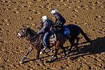 November 3, 2020: Rushing Fall, trained by trainer Chad C. Brown, exercises in preparation for the Breeders' Cup Filly & Mare Turf at Keeneland Racetrack in Lexington, Kentucky on November 3, 2020. John Voorhees/Eclipse Sportswire/Breeders Cup/CSM