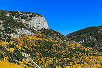 White Mountains autumn foliage, Franconia State Park, New Hampshire, USA.