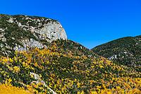 White Mountains autumn foliage, Franconia State Park, New Hampshire, USA.