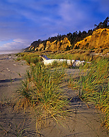 Gold Bluffs Beach Praire Creek Redwoods State Park California