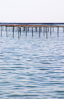Oyster farming beds in the Etang Bassin de Thau. Languedoc. France. Europe.