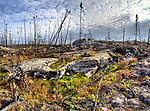 ground after forest fire, near Yellowknife