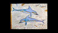 The Minoan 'Dolphin Fresco' wall art from the Queen's Megaron, Knossos Palace, 1600-1450 BC. Heraklion Archaeological Museum. Black Background. <br /> <br /> Two dolphins are depicted swimming amongst small fish .
