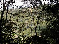 Foi criada pelo Decreto s/n de 13/02/2006, apresenta cerca de 85% de Floresta Ombrófila Aberta e pouco mais de 14% de Floresta Ombrófila Densa, inserida no município de Novo Progresso, PA. Tem como objetivo o uso múltiplo sustentável dos recursos florestais e a pesquisa científica, com ênfase em métodos para exploração sustentável de florestas nativas.<br /> (Fonte: Banco de Dados ISA, abril 2010).<br /> A Flona Jamanxim foi criada dentro de um contexto de ordenamento fundiário da área de influência da rodovia BR163. Seu principal objetivo remonta a servir de um freio ao desmatamento e a exploração predatória e insustentável que avançava na região na mesma velocidade que ocorreu no norte do Mato Grosso alguns anos antes. Sendo uma das regiões de maior avanço do desmatamento em toda a Amazônia brasileira.<br /> Existe uma proposta para redução dos limites dessa Flona, sendo que esta demanda foi gerada em função da manifestação de setores da sociedade local que detém posses dentro dos limites dessa UC, que reivindicam a alteração do atual traçado da unidade com apoio de um grupo de políticos paraenses.<br /> (Fonte: www.amazoniasustentavel.wordpress.com. Acesso em: 08/04/2010).<br /> A Flona Jamanxim figura entre as Unidades de Conservação (UC) que mais sofrem com o desmate. Apenas no ano de 2009, de acordo com o Instituto do Homem e Meio Ambiente da Amazônia (Imazon), a Flona perdeu 60 km2 de florestas. Foram detectados desmatamentos em quase todos os meses do ano, com pico em junho, quando a Jamanxim foi a UC que mais desmatou (18,8 km2).<br /> (Fonte: www.istoeamazonia.com.br. Acesso em: 08/04/2010).<br /> <br /> Novo Progresso, Pará, Brasil.<br /> Foto João Batista<br /> 2008