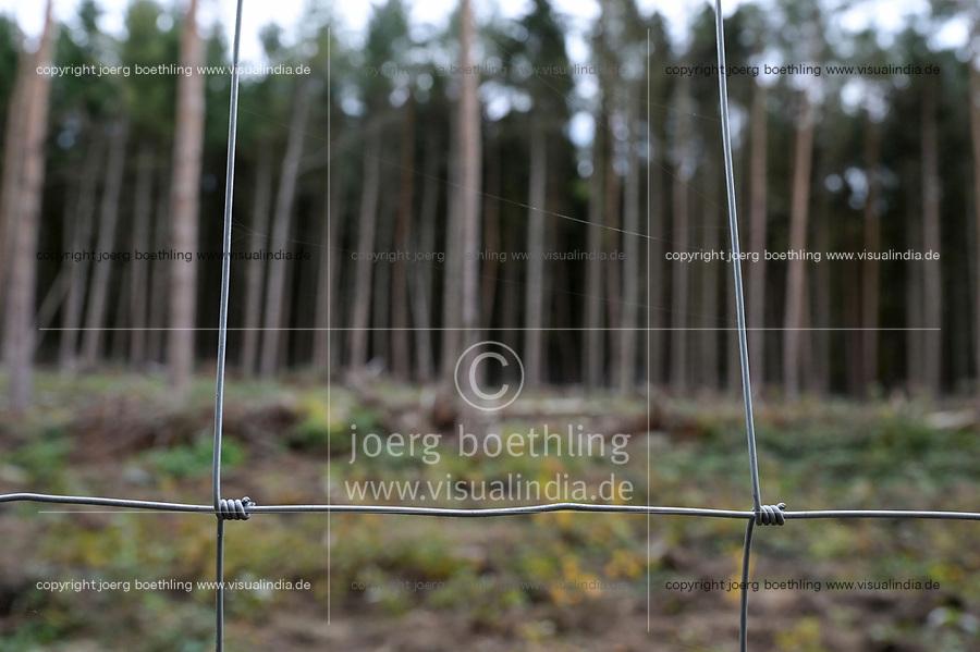 GERMANY, Mecklenburg, Forest, new plantation with oak trees, pine tree with Bark beetle infestation will be logged  / DEUTSCHLAND, Mecklenburg, Luebz, Kiefernwald, nach mehrjähriger Dürre sind viel Bäume geschwächt und anfällig für Sturmschäden und Baumschädlinge, Borkenkäfer befallene Kiefern werden geforstet und durch Eichen ersetzt, Zaun zum Scutz vor Wildfraß