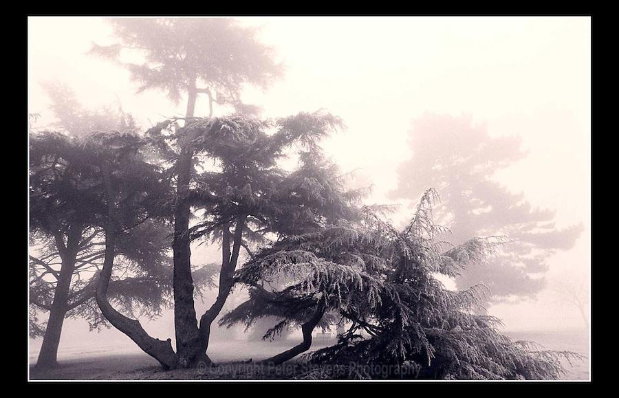 Morning mist in Gunnersbury Park, London - 1997